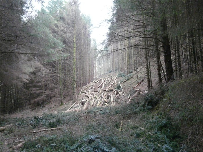 Alfa Tree Services complete felling along pipeline route - 17  March 2015