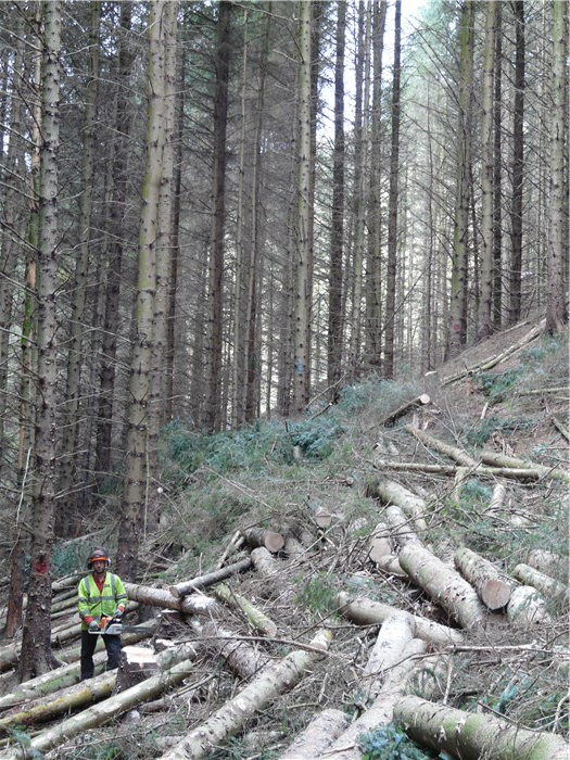 Paul Smith Alfa Tree Services and the pipeline route through Coedydd Aber Forest